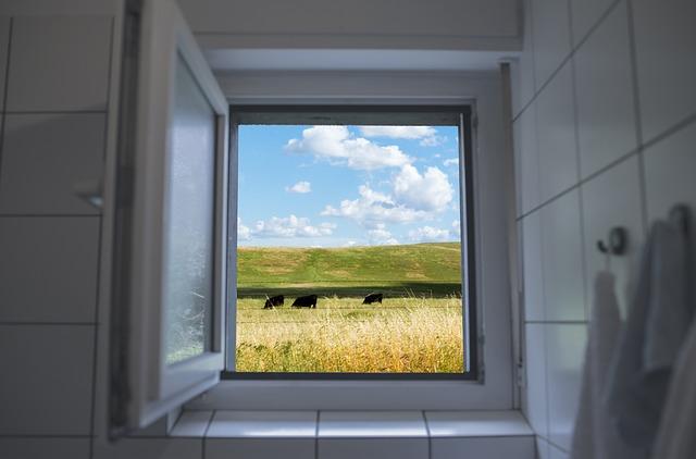okýnko, krávy, pole obloha