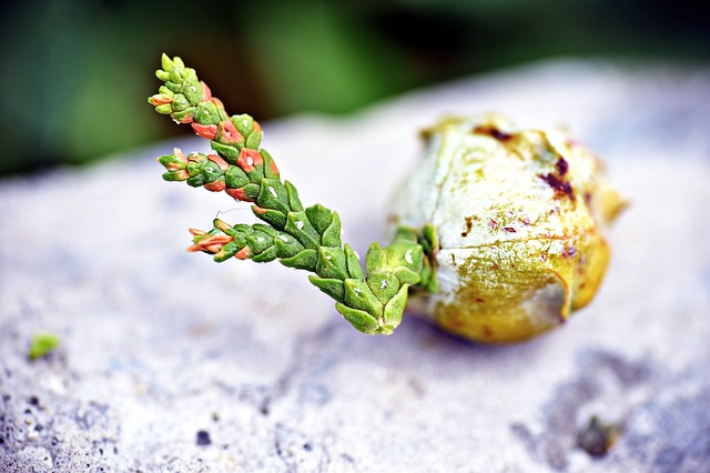 klíčící semeno