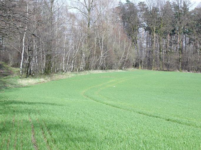 pozemek před stromy